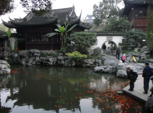 Koi in the pools at the Yuyuan Garden in Shanghai
